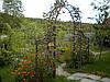 Арка садові ковані арт.дс 5