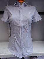 Блуза женская школьная/офис S-2XL(40-48) стрейч-котон купить оптом хорошее качество Одесса 7км