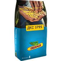 Кукуруза Monsanto DKS 3795 (ФАО 250 Среднеспелый)  2016 г.
