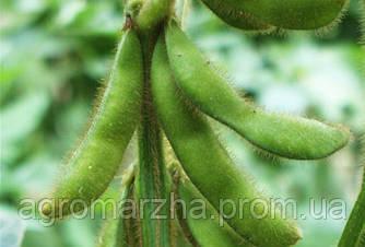 Соя сорт Изидор (Euralis semences)