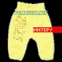 Ползунки (штанишки) на широкой резинке р. 56 демисезонные ткань ИНТЕРЛОК 100% хлопок ТМ Алекс 3165 Желтый