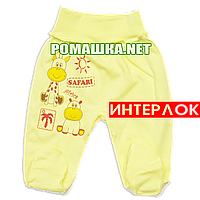 Ползунки (штанишки) на широкой резинке р. 56 демисезонные ткань ИНТЕРЛОК 100% хлопок ТМ Алекс 3165 Желтый2