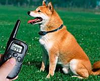 Электронный ошейник для тренировки и воспитания собакAxsel Fox PT-100
