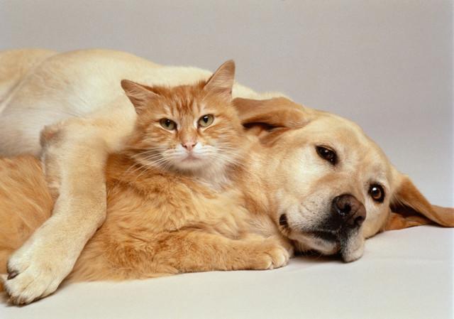 Таблетки от глистов для собак и кошек Pratel (Прател)