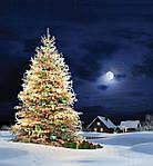Елка, Дед Мороз и праздничное настроение от интернет-магазина «Ялинка»