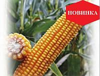 Семена кукурузы ЕС Конкорд (ФАО 250) НОВИНКА!