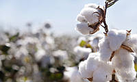 Занимательно о хлопке: от выращивания до производства ткани (видео)