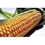 Семена кукурузы ЕС Инберроу