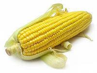 Семена кукурузы ЕС Сириус