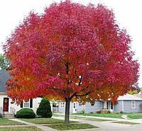 Листопадные деревья
