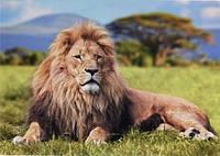 Фотообои на плотной бумаги для стен 272*196 см 8 листов: Животные, Природа, Лев №22