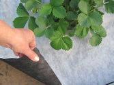 Агроволокно Premium-Agro 50 г/м² черно-белое (1,6*50м) Польша, от сорняков, мульчирующее