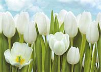 Фотообои из бумаги для стен 194*134 см , 8 листов, Пейзажи, Цветы, Тюльпаны