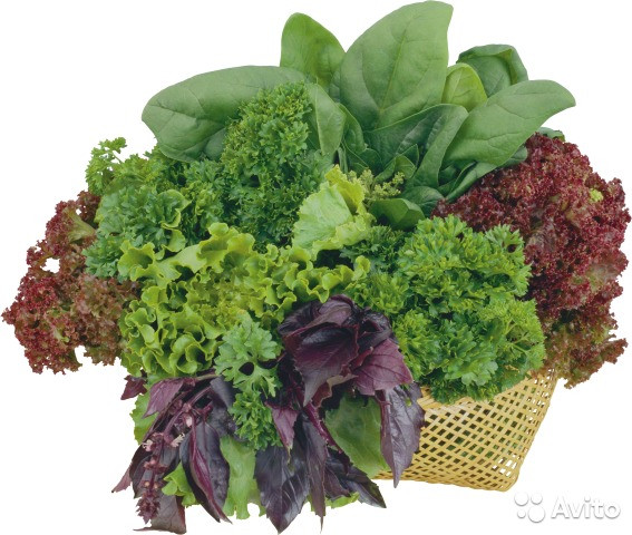 Насіння щавлю, салатів, шпинату, петрушки, кропу в аматорській упаковці.