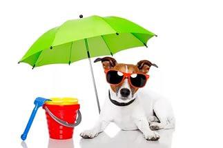 Зонты, очки и прочее