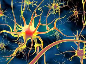 Укрепление нервной системы, улучшение памяти