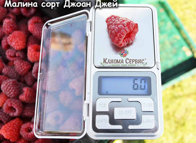 ягода малины джоан джей, урожайность малины джоан джей