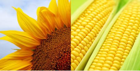Семена подсолнечника, кукурузы