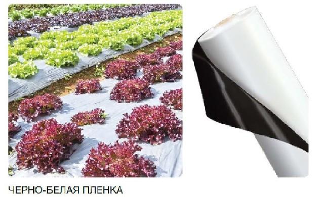 ПЛЕНКА ДЛЯ СИЛОСОВАНИЯ (черно-белая) 12м*50м (150мкм) - AgroDolina в Виннице