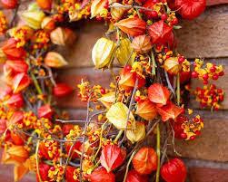 Осенние цветы и листья