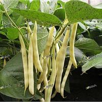 Семена фасоли Аидаголд 500 грамм Semo