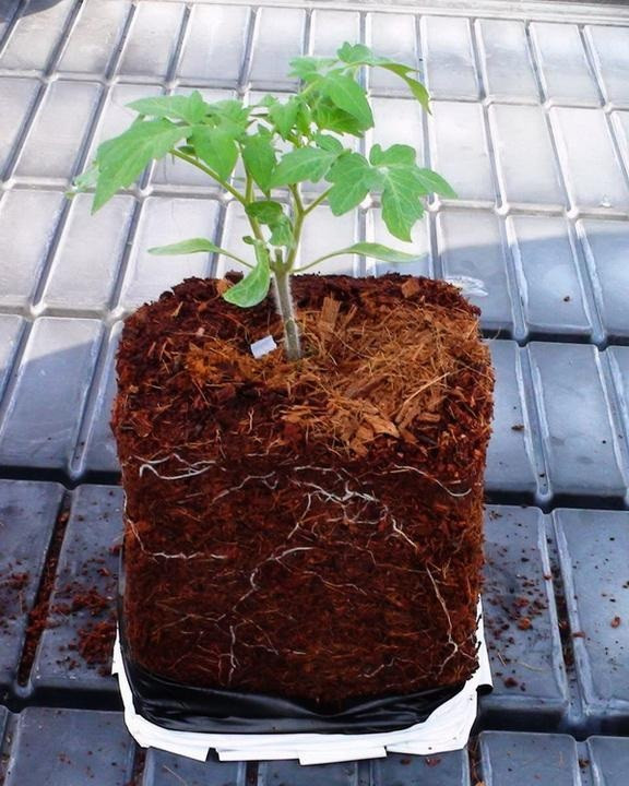 Кокосовый грунт для рассады и цветов 2.5 кг