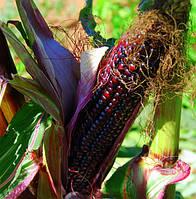 Кукуруза   Сенека Красный Сталкер