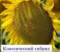 Семена подсолнечника ЛГ 5635 (пластичный)