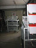 Клетки для 60 кур несушек, фото 2