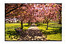 Картина на холсте аллея сакуры (20х30)