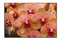 Картина на холсте Красные орхидеи (20х30)