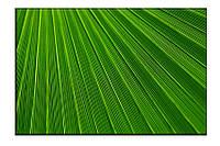 Картина на холсте Зелень (20х30)
