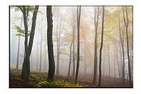 Картина на холсте Лесной туман (20х30)