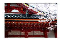 Картина на холсте Япония сакура (50х75)