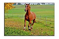 Картина на холсте Бегущий конь (30х45)