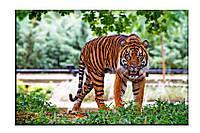 Картина на холсте Тигр (30х45)