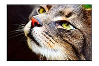 Картина на холсте Кошка (50х75)