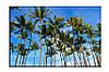 Картина на холсте Пальмы (30х45)