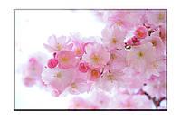 Картина на холсте Ветка сакуры (40х60)