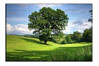 Картина на холсте Дерево жизни (30х45)