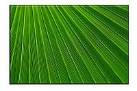 Картина на холсте Зелень (30х45)