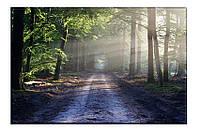 Картина на холсте Лесная дорога (40х60)