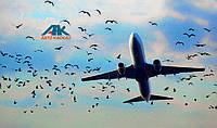 Инцидент с пассажирским AIRBUS
