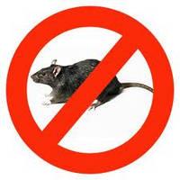 Борьба с грызунами (уничтожение крыс, мышей)
