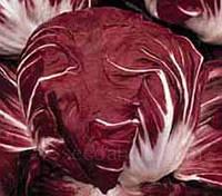 Радиккио Palla Rossa 3 ( листовой цикорий)