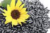 Значение внесения удобрений для развития подсолнечника