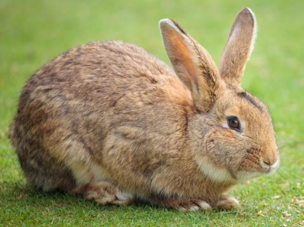 Ferplast Rabbit 120 EL Клетка для кроликов и морских свинок