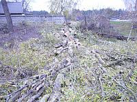 Удаление деревьев на участке.