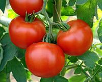 Семена томата Энигма F1 Seminis 500 семян
