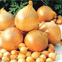 Лук севок Шекспир сорт ранний, луковица округлой формы желтовато-коричневого цвета